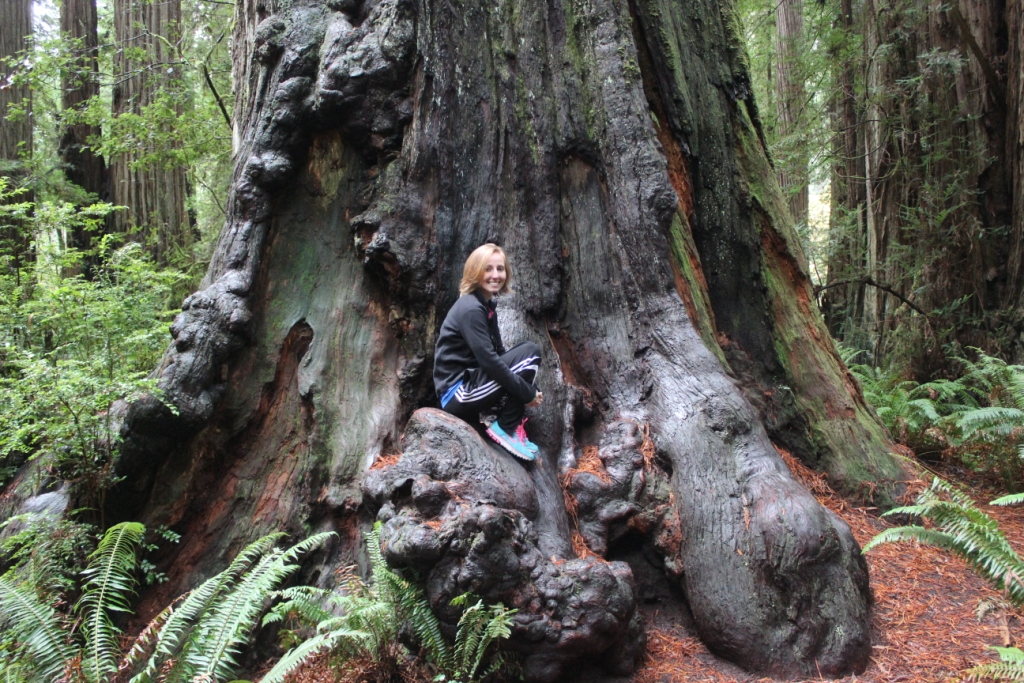 Brianna and a Redwood