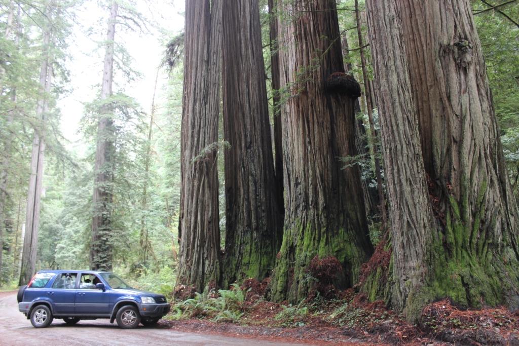The Van in the Redwoods