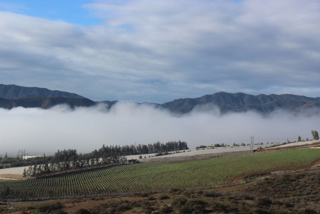 Fog Over Baja Wine Country