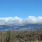 Cacti in Baja