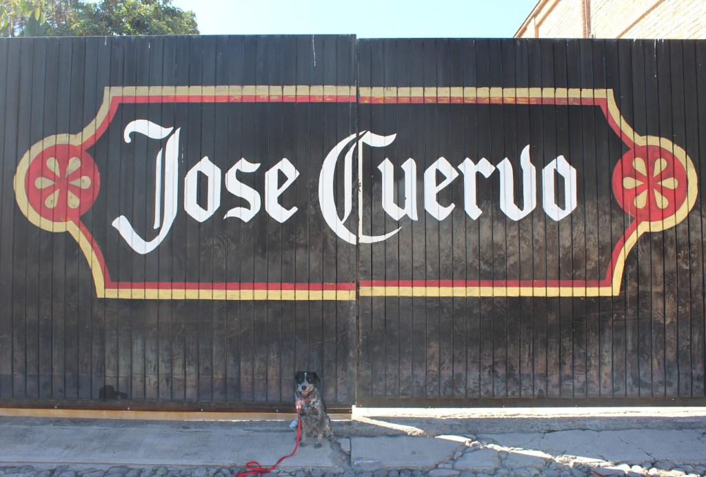 Maya at the Jose Cuervo gates