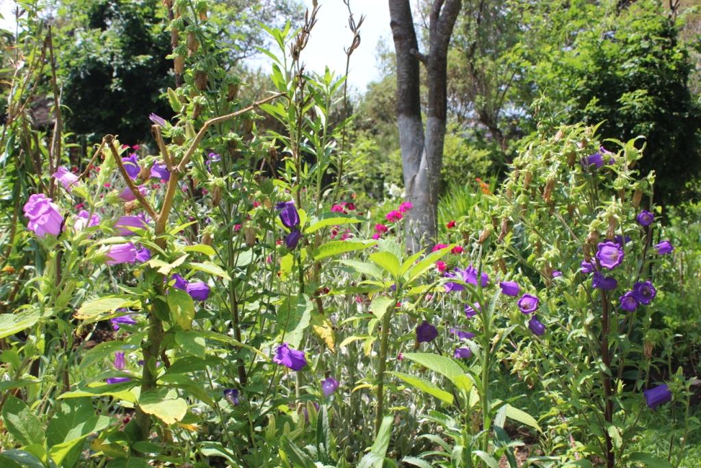 Flowers in Janet's Garden