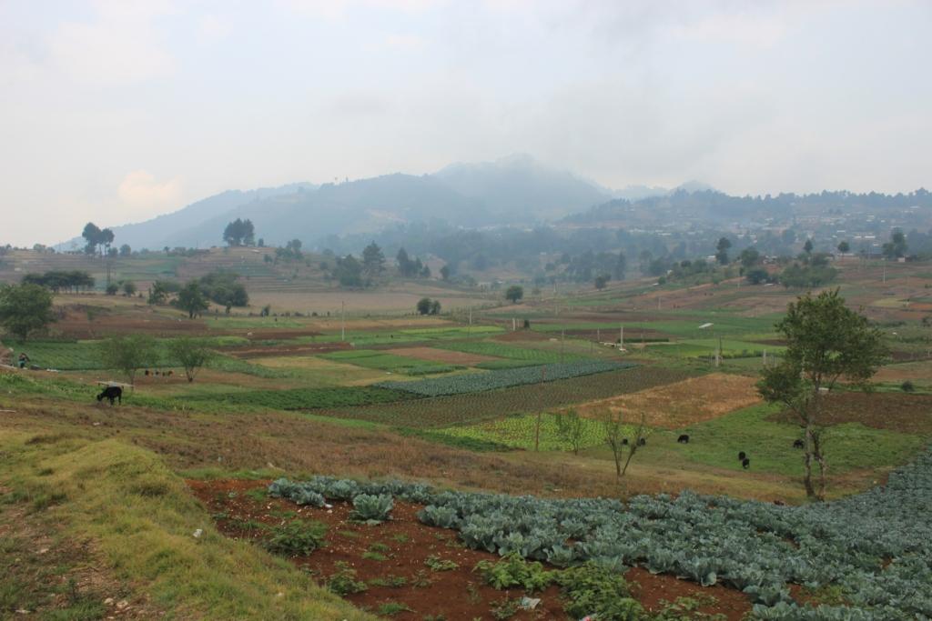 Chiapan Farmland