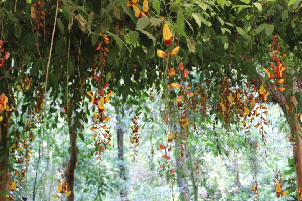 Hanging flowers at Reserva Natural Atitlán near Panajachel, Guatemala