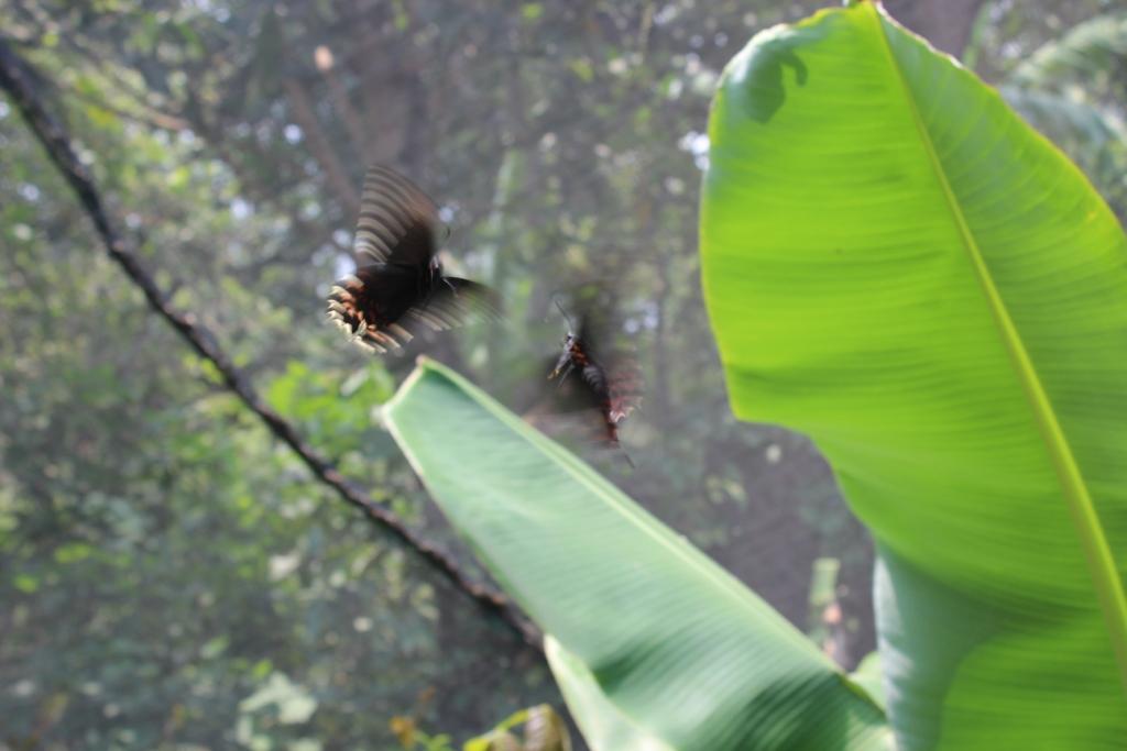 Butterflies at Reserva Natural Atitlán near Panajachel, Guatemala