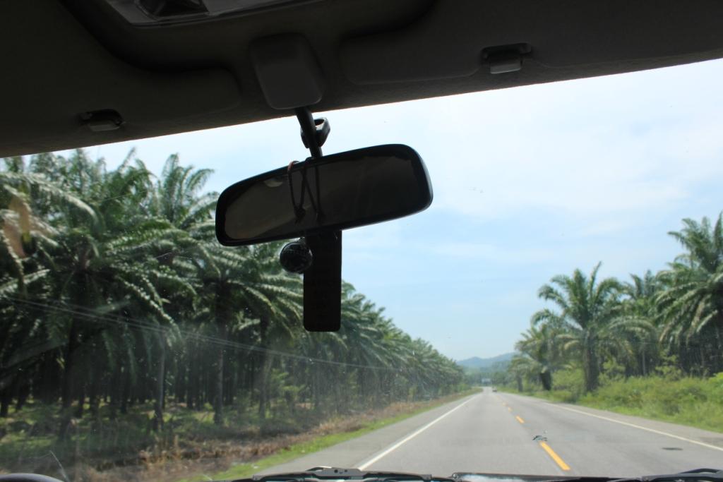 Palm plantations in Honduras