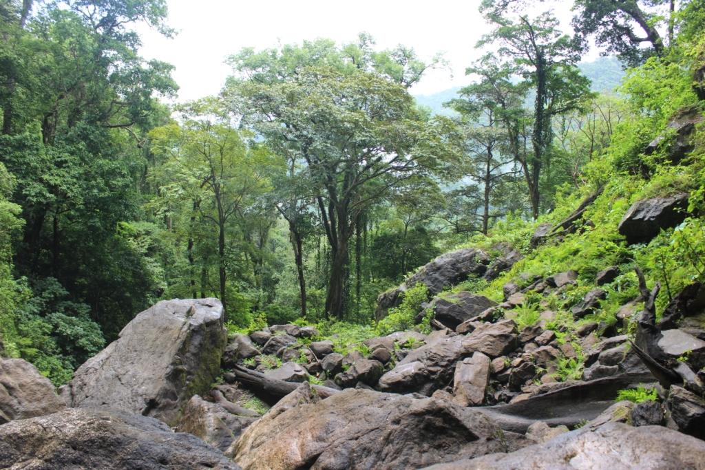 El Bejuco in Pico Bonito National Park, Honduras