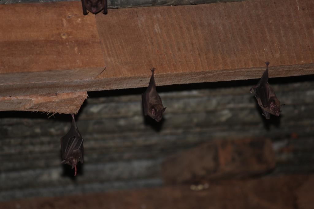 Ah! Bats!
