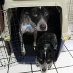 Maya and Olmec share a kennel