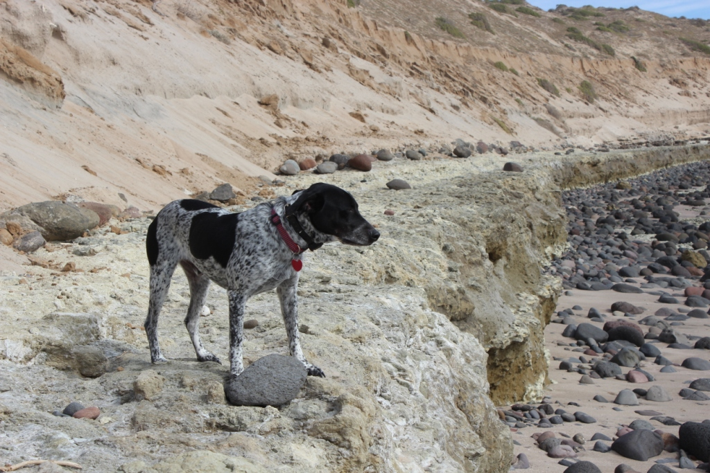 Handsome Dog on Rocky Beach