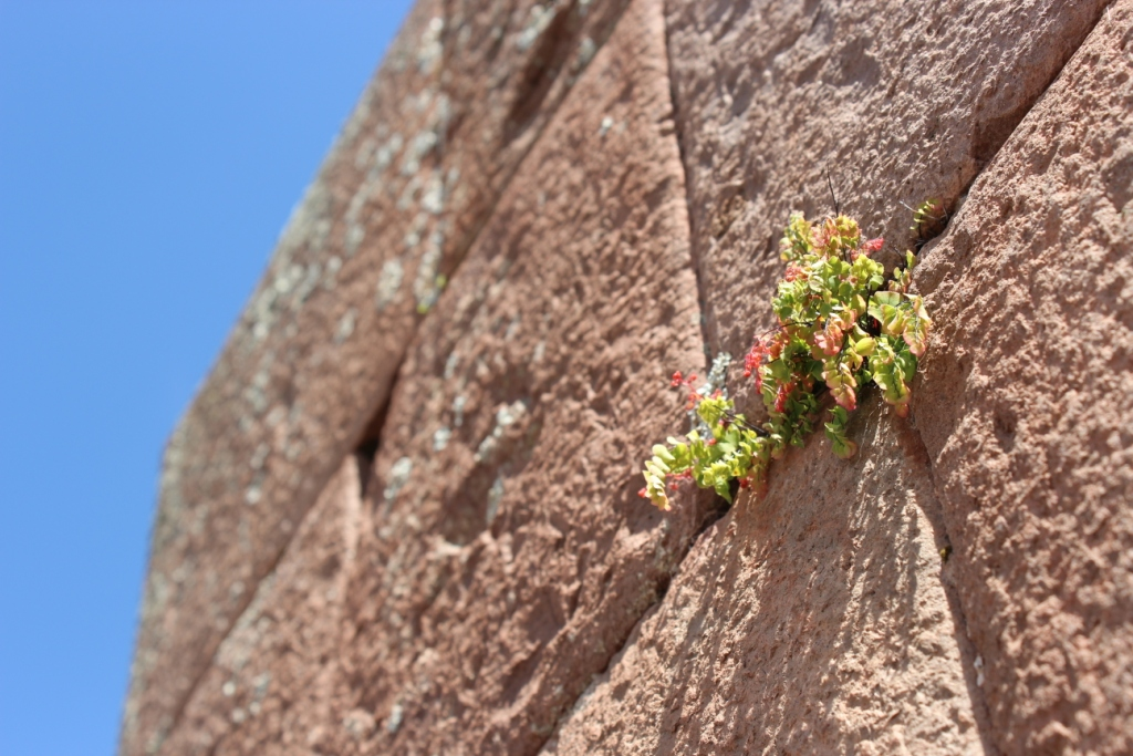 Plant Growing from Wall