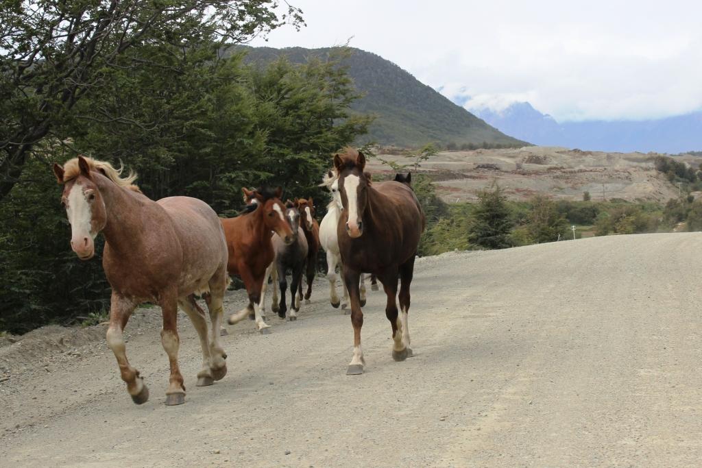 Horses in Tierra del Fuego National Park