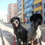 Dogs on Minhocão
